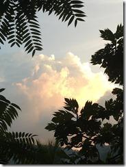 スリランカ 165